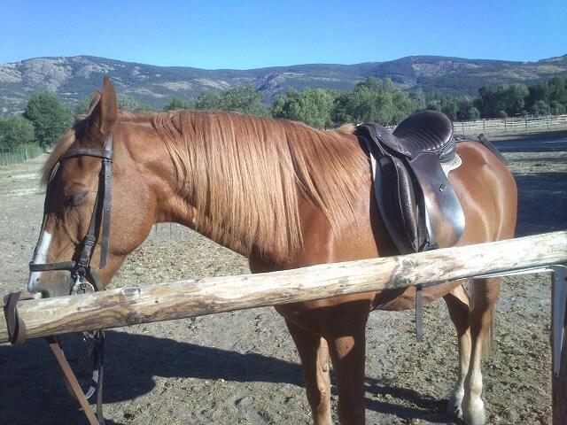 ruta a caballo buitrago de lozoya madrid