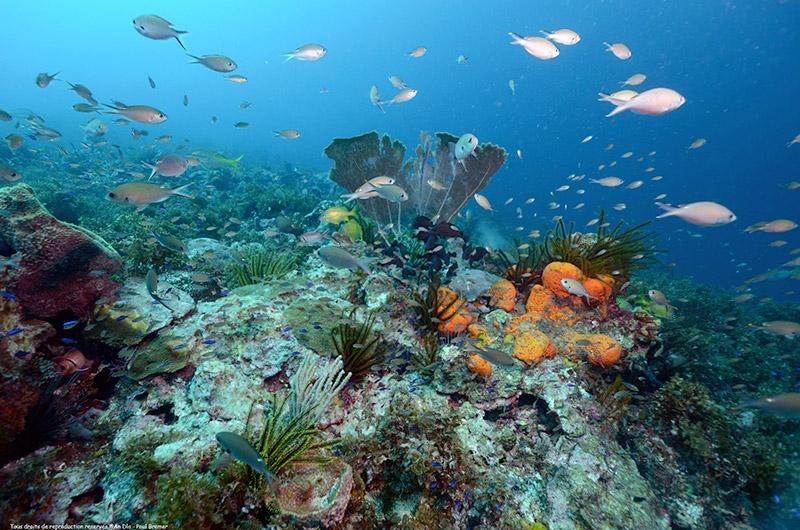 mar cuba