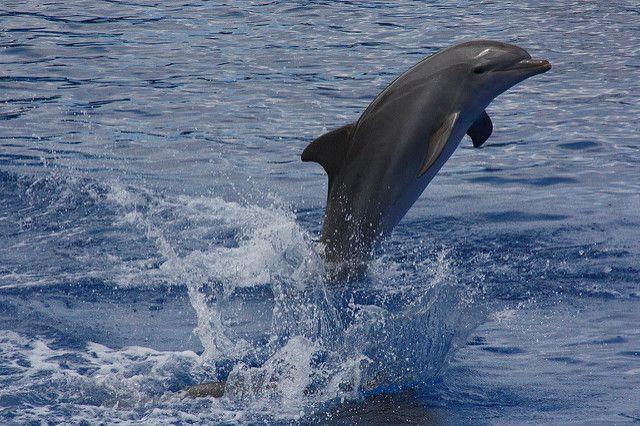 oceanografic de valencia