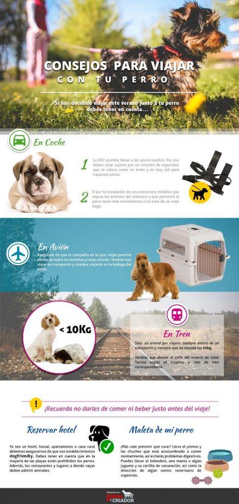 Infografía viaje perros