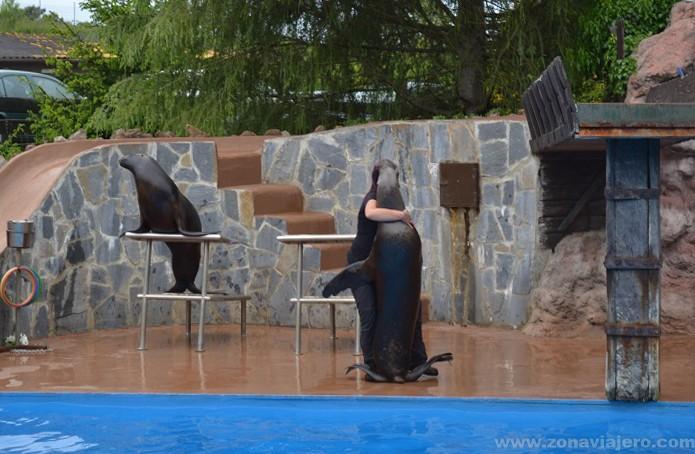 Exhibición focas marinas cabarceno