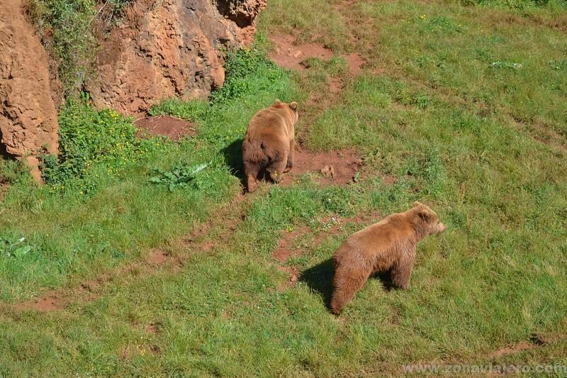 cabarceno osos