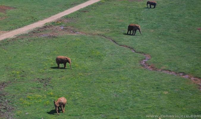 elefantes desde el telecabina de cabarceno