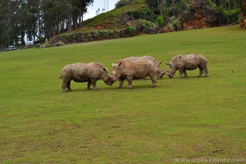 rinocerontes cabarceno