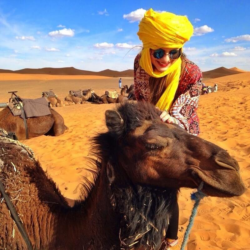 camello desierto sahara