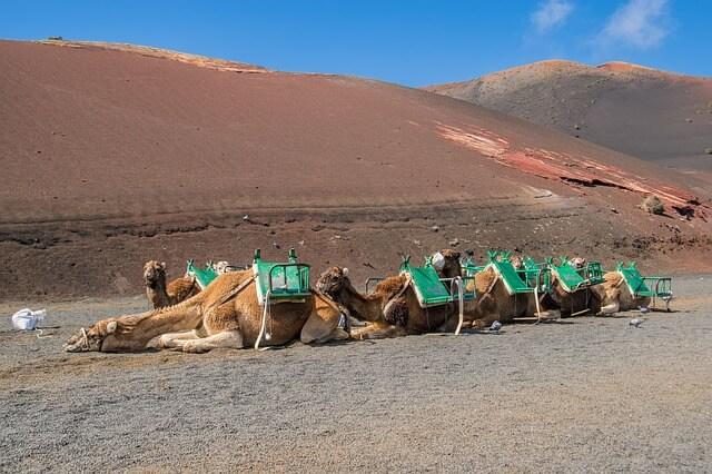 echadero de camellos timanfaya