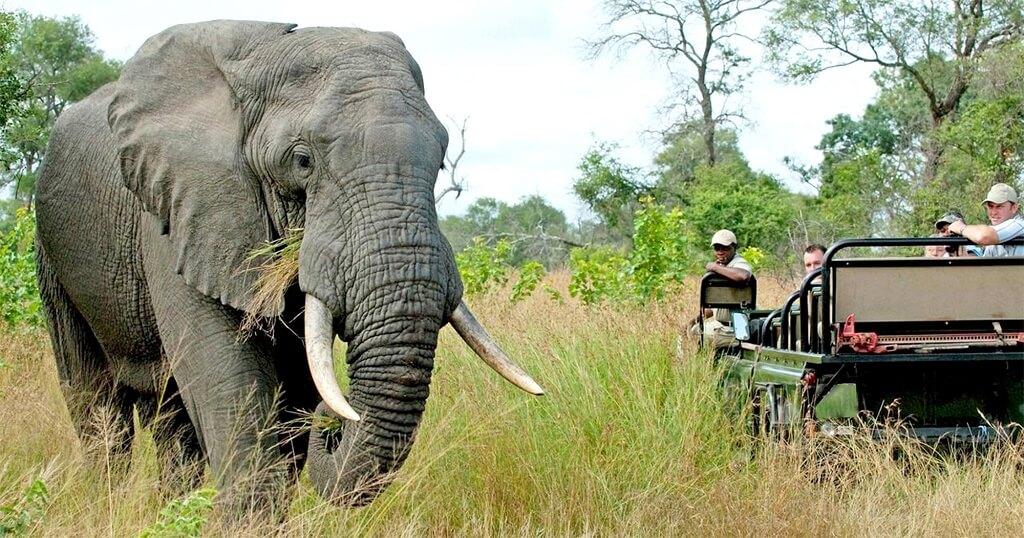 Parque KRUGER Sudafrica