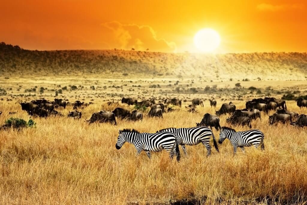 Guía para disfrutar de Kenia, la cuna de los safaris.
