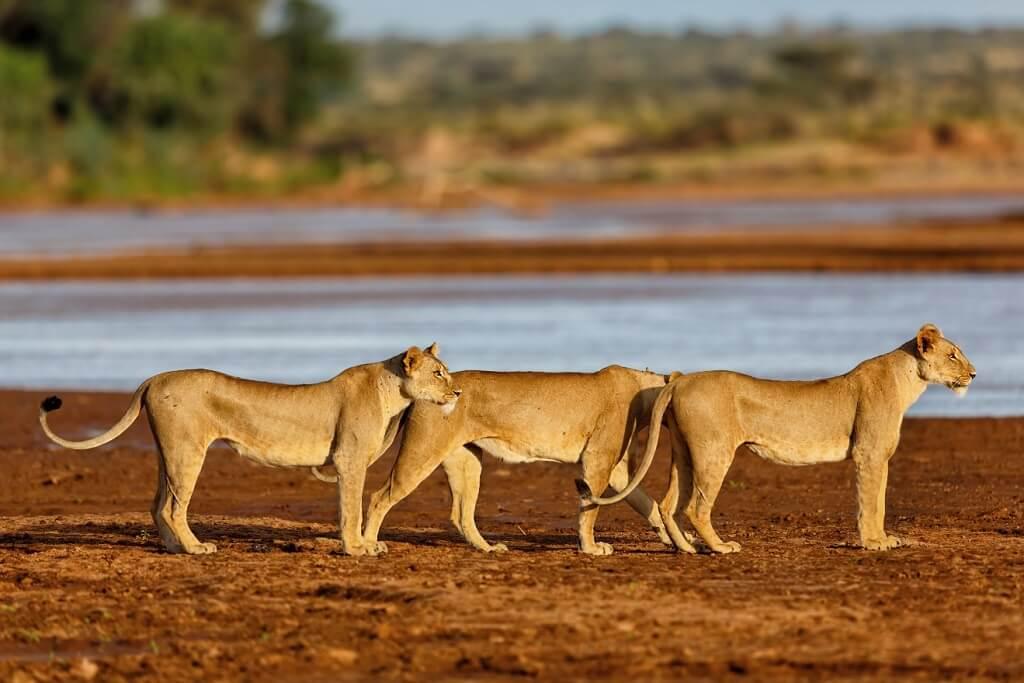 donde hacer un safari en kenia