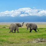Los mejores países de África para visitar en unas vacaciones