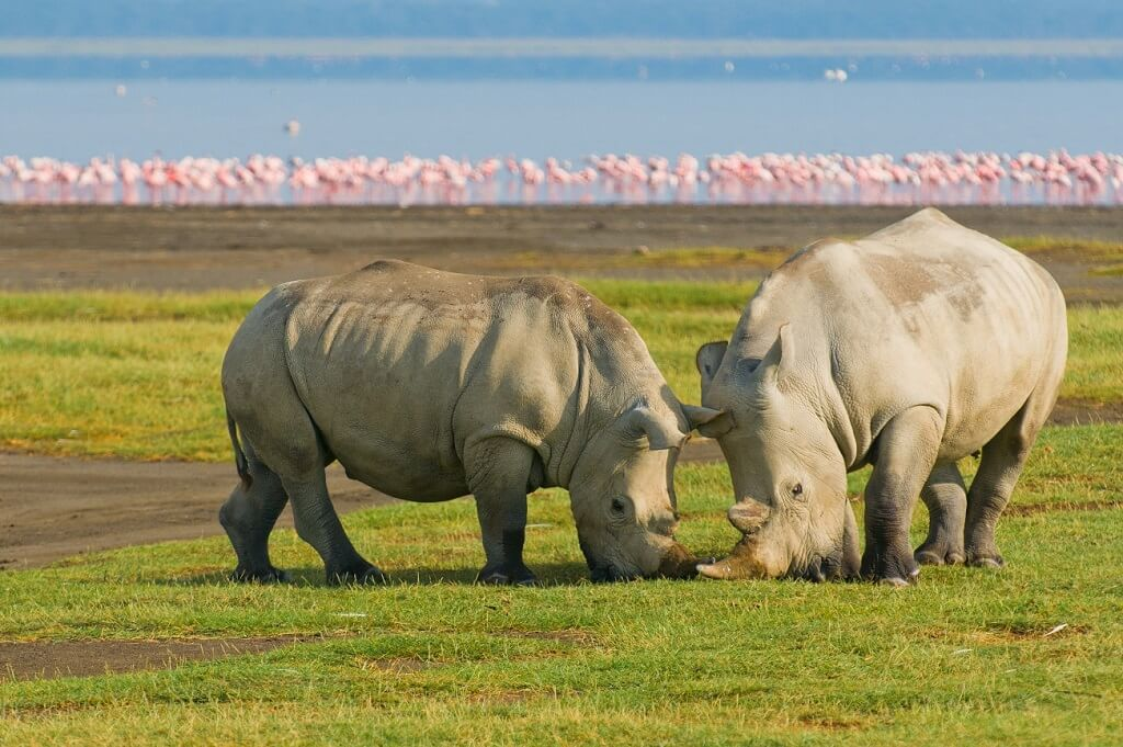 rinocerontes safari en kenia