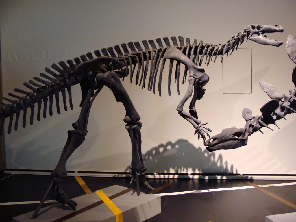museo de ciencias naturales ninos madrid