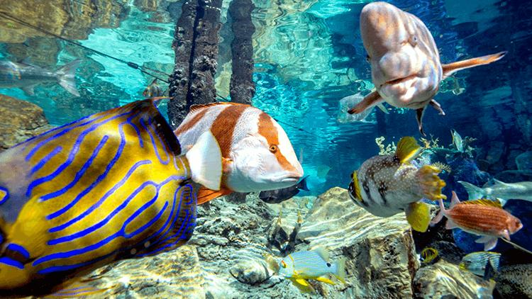 parque acuatico discovery cove orlando