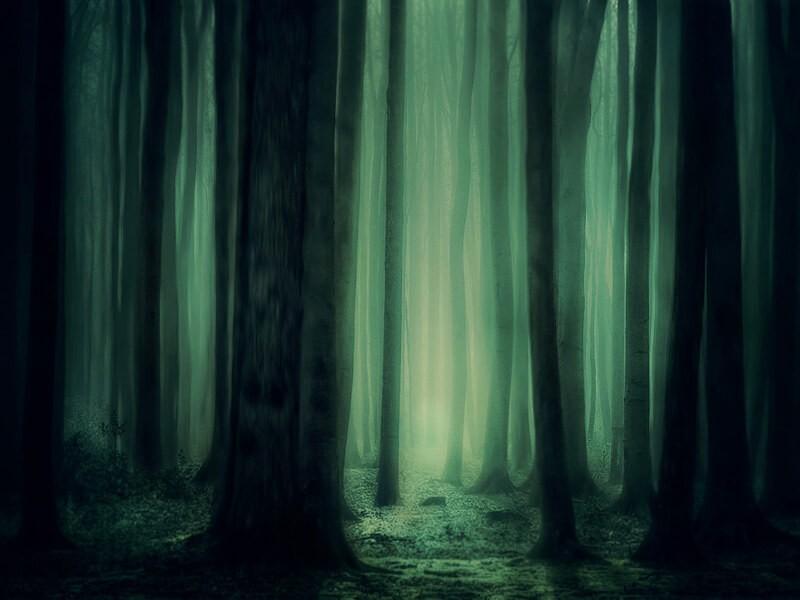 La bruja del bosque, Bilbao