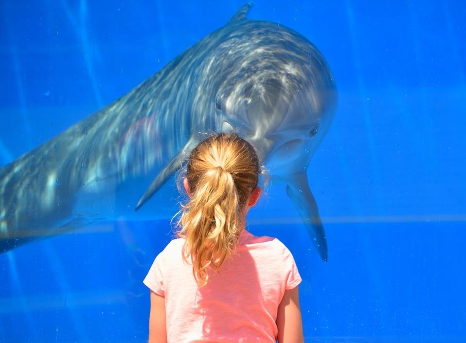 Sevilla-acuario-niños