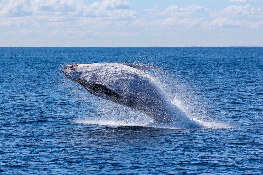 buscar ballenas maztlan