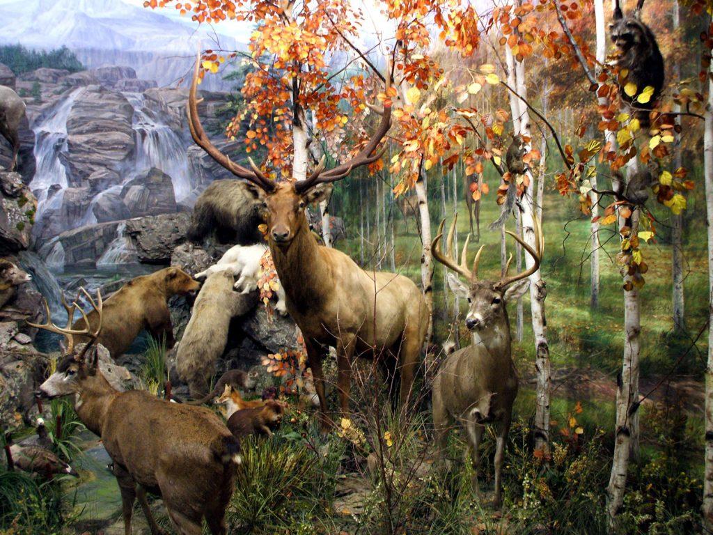 León-museo-fauna-salvaje