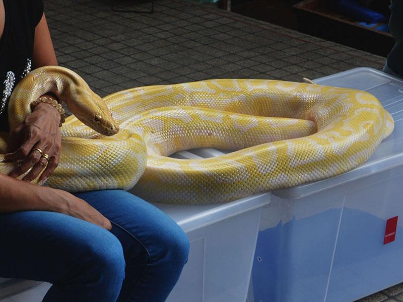 Granja de las serpientes, Bangkok