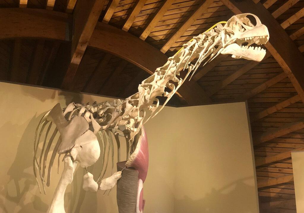Museo del Jurasico de Asturias con ninos