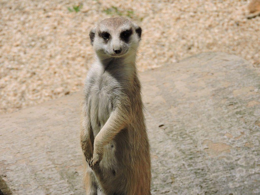 los mejores zoos de espana