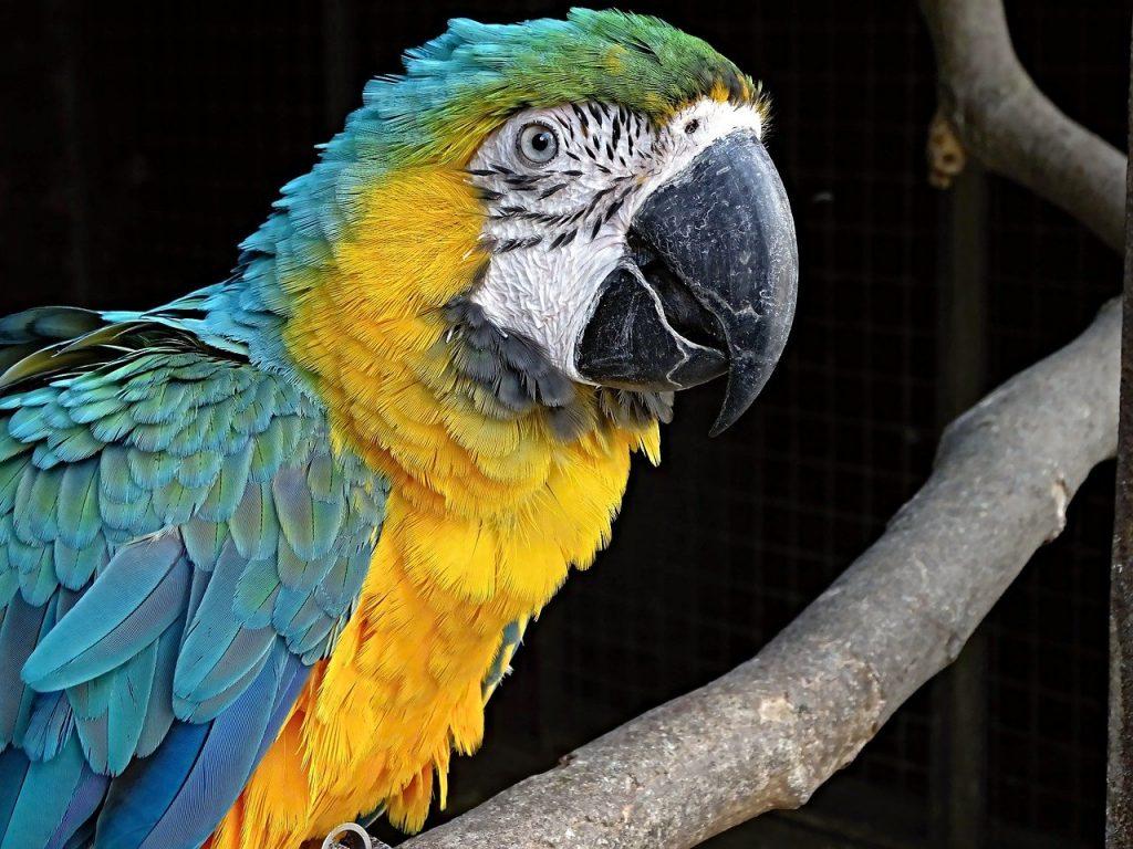 mejores zoos de espana loro parque