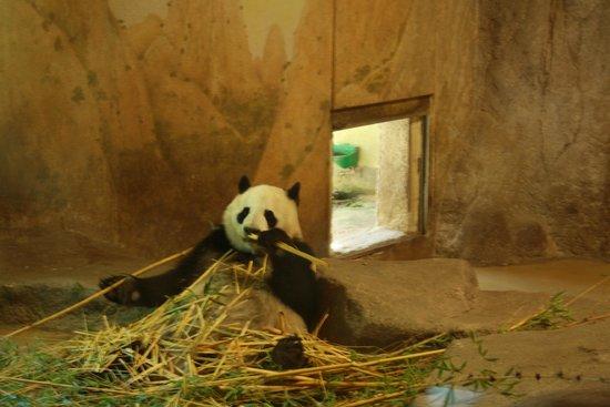 osos panda zoo aquarium madrid