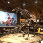 Visita al Museo del Jurásico de Asturias (Con ruta por las huellas de dinosaurios)