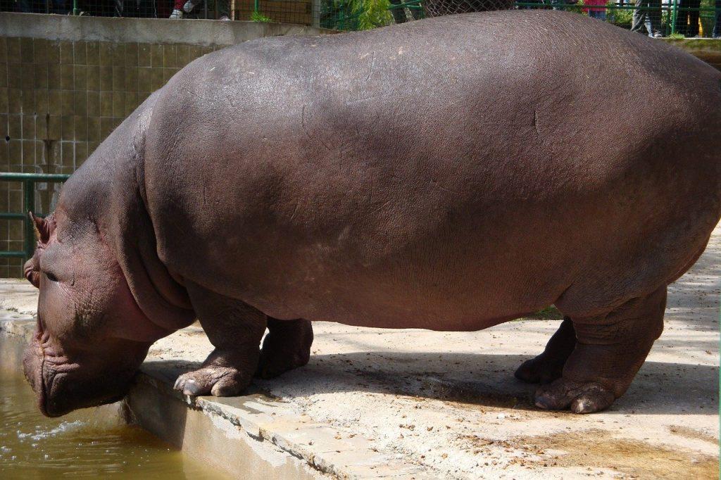 zoo barcelona mejores zoo