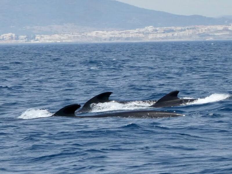 Avistamiento de ballenas y delfines, Cádiz