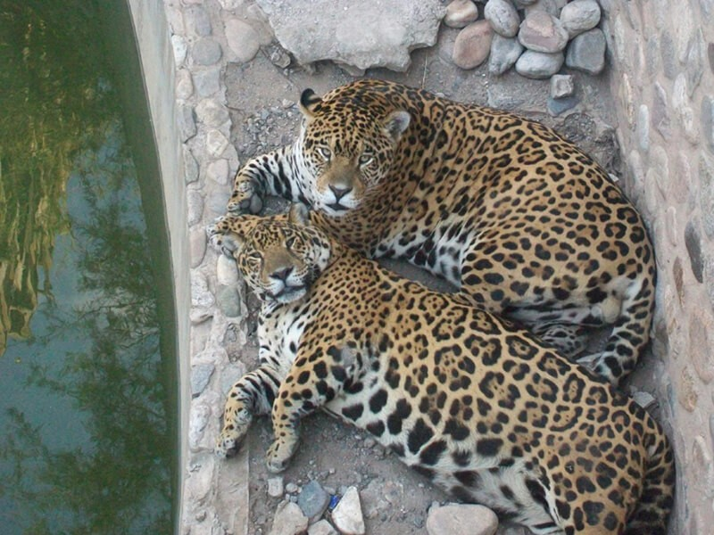 El Zoológico de Córdoba, Córdoba