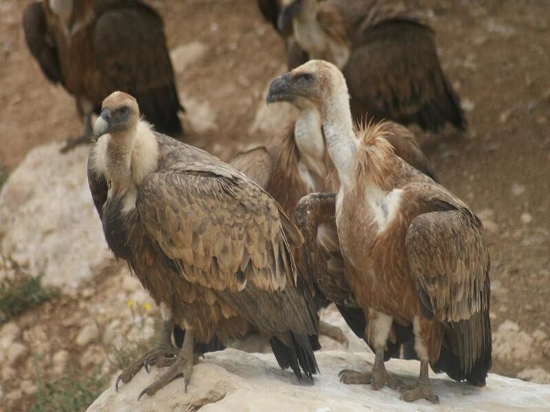 Observatorio de Aves Mas de Bunyol, Teruel