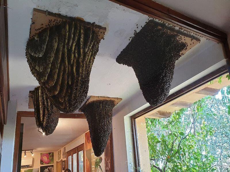 Museo de las abejas Avila