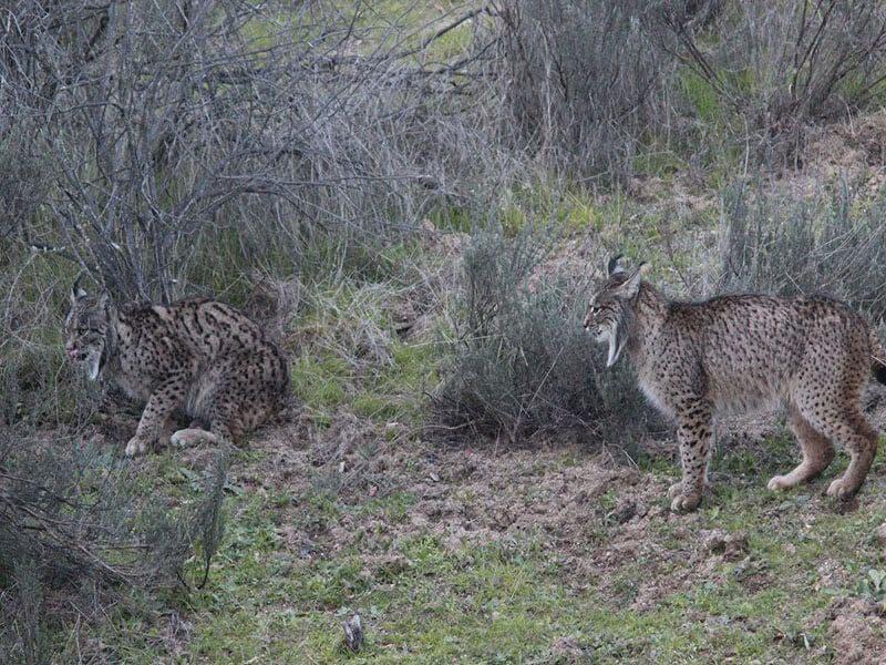 Safari en el Parque Natural Sierra de Andújar, Jaén